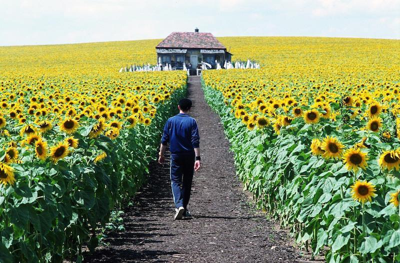 2005 Everything Is Illuminated