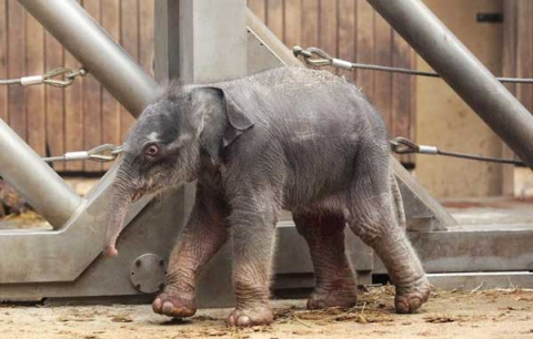 baby-elephant-ostrava