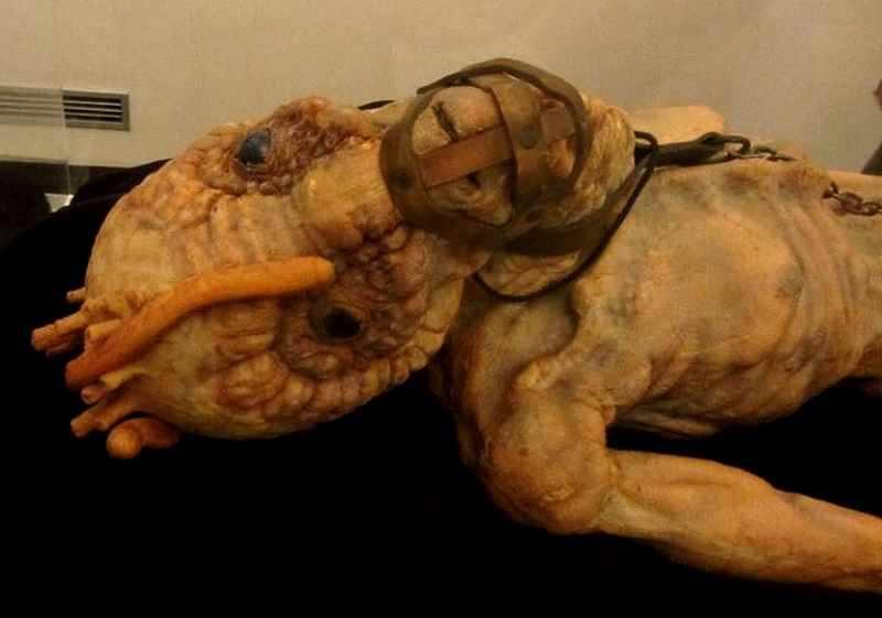 Cronenberg Evolution