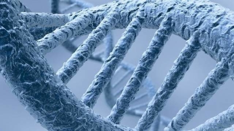 Genetic research extended lifespans