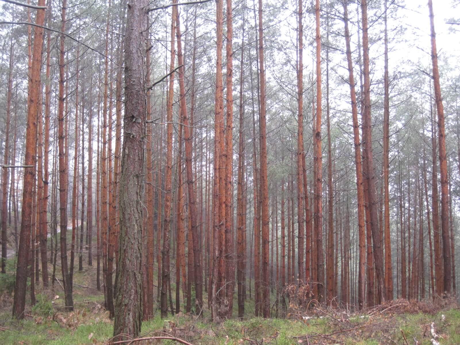 Malá Skála Forest