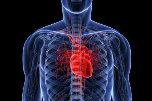 body x-ray heart