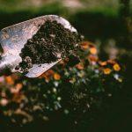 gardening plants nursery