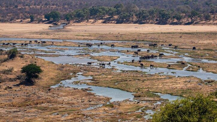 Kruger National Park herd of elephants